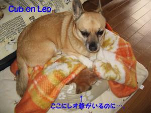 Cub_on_leo